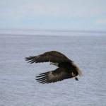 Alaska-Adventure-(2456)