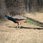 Zoo---April-2010-048