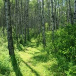 This is what I wish the whole trail looked like, sadly it is not.