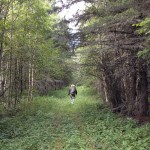 The trail was fairly wide, but it had not been maintained and the grass was quite tall.