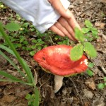 There were many types of large, colorful mushrooms.