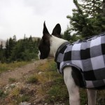 Lincoln in his Canadian style flannel jacket